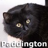 Paddington was adopted from the Cat House and Adoption Center on Saturday, May 2, 2015.<br /> <br /> Paddington<br /> <br /> Gone underground.<br /> <br /> This big fuzzy bear has found safety and is in search of his forever home that he is sure is waiting for him. Paddington is on the lookout to find the explorer that is ready to connect with him.