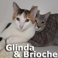 Glinda and Brioche were adopted from the Cat House and Adoption Center on Saturday, January 3, 2015.<br /> <br /> Glinda and Brioche<br /> <br /> Girls rule.<br /> <br /> These adorable step sisters bonded quickly and will not cost you a fortune at the mall or planning a wedding. Content to curl up together, entertain each other, groom one another and searching for a special home to complete their life.