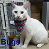 Bugs was adopted from the Cat House and Adoption Center on Saturday, April 25, 2015.