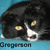 Gregerson was adopted from the Cat House and Adoption Center on Saturday, May 23, 2015.