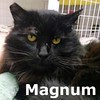 Magnum was adopted from the Cat House and Adoption Center on Saturday, April 11, 2015.