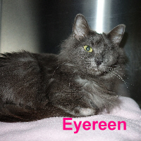 Eyereen was adopted from the Cat House and Adoption Center on Saturday, February 14, 2015.