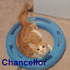 Chancellor was adopted from his foster home at South Bay Veterinary Hospital on Friday, April 3, 2015<br /> <br /> <br /> Chancellor<br /> <br /> Second Chances.<br /> <br /> Cute and adorable. Chancellor is still a young boy with a big zest for life. He can play for hours and loves to socialize with other cats and snuggle with his humans. Are you in need of a second chance?
