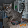 Lydia was adopted from the Cat House and Adoption Center on Saturday March 14th, 2015.