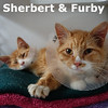 Sherbert & Furby were adopted from the Cat House and Adoption Center on Saturday, May 2, 2015.