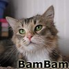 BamBam was adopted from the Cat House and Adoption Center on Saturday, March 7, 2015.<br /> <br /> BamBam<br /> <br /> Where is Pebbles?<br /> <br /> This gorgeous girl was rescued from a home unsuitable for her and her kittens. Her boys were adopted and she is now reaching out to find a safe and secure home of her own. Beautiful inside and out.