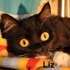 Liz (Lilly) was adopted from the Cat House and Adoption Center on Sunday, May 17, 2015.