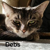 "Debs was adopted from her foster home on Friday, April 10, 2015.<br /> <br /> Debs<br /> <br /> ""Grumpy Cat"", not!<br /> <br /> Lil' Deb is sweet, shy, and has a ""grumpy cat"" face that is so precious and charming. We feel she is now ready to join the ranks and find a home of her very own. Lil' Deb is a serious thinker, and spends much time pondering her future with you."