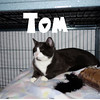 Tom was adopted from the Cat House and Adoption Center on Saturday, January 15, 2015.