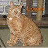 Logan was adopted from the Cat House and Adoption Center on Saturday, February 14, 2015.