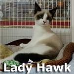 Lady Hawk was adopted from the Cat House and Adoption Center on Saturday, January 25, 2015.