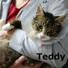 Teddy was adopted from the Cat House and Adoption Center on Saturday, May 2, 2015.