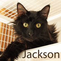 Jackson was adopted from the Cat House and Adoption Center on Saturday, June 27th, 2015.<br /> <br /> Jackson<br /> <br /> Dumped.<br /> <br /> Life challenges can really bring a guy down, although he has a big heart and loves to give and he is ready to put all those challenges behind him with a new lease on life. Little Jay Arthur eagerly enjoys a gentle hand and all the love you have to give.