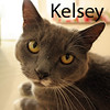 Kelsey (and Andy) was adopted from the Cat House and Adoption Center on Saturday, August 29, 2015.<br /> <br /> Kelsey<br /> <br /> Adorable.<br /> <br /> She may have picked the wrong crowd to follow, but Kelsey is on the right track now. She understands that being young doesn't mean you know everything. Charming and cuter than she realizes, you will see the charisma when you look at her.