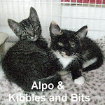 Alpo & Kibbles and Bits (brother and sister) were adopted from the Cat House and Adoption Center on Saturday, October 10, 2015.