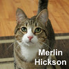 Merlin and Snowball were adopted together from the Cat House and Adoption Center on Saturday, September 19, 2015.<br /> <br /> Merlin Hickson<br /> <br /> No wizard, just wonderful.<br /> <br /> A legend in our minds because he is so outgoing and playful there is not time to worry about who he is, just how much fun he can have. With a life full of adventure ahead of him, he is anxious for a companion to take along with him.