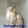 Samantha Day was adopted from the Cat House and Adoption Center on Saturday, June 13, 2015.<br /> <br /> Samantha Day<br /> <br /> <br /> Every day is a good day.<br /> <br /> <br /> Samantha (and her friends) arrived at our adoption center and seems to be quite comfortable.  The new surrounding and staff care agrees with her every need.  A delightful and beautiful girl.