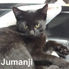 Jumanji & Dewey were adopted by their foster family on Saturday, October 24, 2015.<br /> <br /> Jumanji<br /> <br /> Lost in the woods.<br /> <br /> Thank goodness it did not take 26 years for this lost boy to be found and brought to safety. Grateful for shelter and loving attention, Jumanji says its your turn and to give him a forever home.
