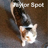 Taylor Spot was adopted from the Cat House and Adoption Center on Saturday, June 13, 2015