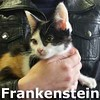 Frankenstein was adopted from her foster home at Steamboat Animal Hospital on Sunday, July 26, 2015.