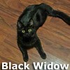 Thor and Black Widow were adopted together from the Cat House and Adoption Center on Saturday November 7th, 2015.