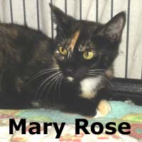 Mary Rose was adopted from her foster home at South Bay Veterinary Hospital on Wednesday, July 8th, 2015.