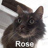 Rose was adopted from the Cat House and Adoption Center on Monday, July 27, 2015.