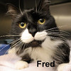 Fred and Poofer were adopted from the Cat House and Adoption Center on Saturday, June 20, 2015.<br /> <br /> Fred Fred<br /> <br /> Just Fred.<br /> <br /> What a guy, loves to just be loved. Fred requires little and gives so much back. If you give him a soft spot and a little attention, he will just purr and knead ... loving life.