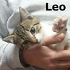 Leo was adopted from the Cat House and Adoption Center on Saturday, September 5th, 2015.