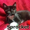Sprocket and Perdita (sisters) were adopted from the Cat House and Adoption Center on Saturday, October 3, 2015.