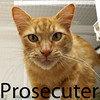 "Prosecutor was adopted from the Cat House and Adoption Center on Saturday, July 11, 2015.<br /> <br /> Prosecuter<br /> <br /> Cuter!<br /> <br /> ""Residing under a building with the special ladies taking care of me was fine for a while, although being safe inside and lounging in my hammock seems to suit me better."" This handsome sweet fellow wants only to brighten your day and asks so little in return."