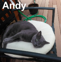 Andy (and Kelsey) was adopted from the Cat House and Adoption Center on Saturday, August 29, 2015.
