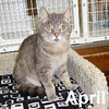 April Jenny was adopted from the Cat House and Adoption Center on Saturday, July 25, 2015.<br /> <br /> April Jenny<br /> <br /> Street life is not easy.<br /> <br /> Taking up a safe spot between two houses did not pan out for this special lady. The cardboard sign brought no takers looking for a new roommate. April is ready to do her part to join your home and will talk to you when no one else will.