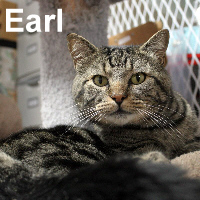 Earl was adopted from the Cat House and Adoption Center on Saturday, October 31, 2015.<br /> <br /> Earl<br /> <br /> What a hunk!<br /> <br /> Masculine, muscle bound, and charming. Life has changed from being homeless to having staff wait on him, and Earl is enjoying every minute of the luxuries that we can provide him. Are you looking for that special someone?