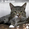 Cristal and J. Arthur were adopted together from the Cat House and Adoption Center on Saturday, October 3, 2015.<br /> <br /> J. Arthur<br /> <br /> Dumped.<br /> <br /> Life challenges can really bring a guy down, although he has a big heart and loves to give and he is ready to put all those challenges behind him with a new lease on life. Little Jay Arthur eagerly enjoys a gentle hand and all the love you have to give.