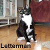 Letterman was adopted from the Cat House and Adoption Center on Saturday, August 29, 2015.<br /> <br /> Letterman<br /> <br /> Say good night Dave!<br /> <br /> This fellow in his suit wants to give you the top ten reasons you should adopt a Tuxedo cat. Come and meet Letterman and he will give you many reasons why you should adopt him!
