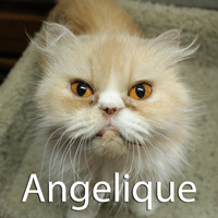 Angelique was adopted from the Cat House and Adoption Center on Thursday, July 23, 2015.