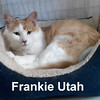 Frankie Utah was adopted from the Cat House and Adoption Center on Saturday, September 26, 2015.