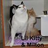 Lil Kitty and Milton were adopted from Steamboat Animal Hospital on Tuesday, August 11, 2015.