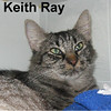 Keith Ray was adopted from the Cat House and Adoption Center on Saturday, August 29, 2015.<br /> <br /> Keith Ray<br /> <br /> Charmer.<br /> <br /> Driven by the excitement and joys of life, yet inside he dreams of being with a person who allows him to just become comfortable from day to day. Simple pleasures are more than enough to create the purrfect life.