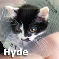 Hyde was adopted from her foster home at Steamboat Animal Hospital on Sunday, July 26, 2015.