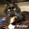 Poofer and Fred were adopted from the Cat House and Adoption Center on Saturday, June 20, 2015.<br /> <br /> Poofer<br /> <br /> Puff ball.<br /> <br /> This little lady craves love and attention and would love to be in a home with someone that wants to be at her service. Want a little puff ball in your home?