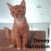 Jumanji & Dewey were adopted by their foster family on Saturday, October 24, 2015.<br /> <br /> Dewey Dandelion<br /> <br /> Cuteness abounds.<br /> <br /> His sweet face and steady purr will make you plant him right in your arms. Dewey is digging around for the best place to call home. He needs good light and plenty of toys to help him grow big and strong.