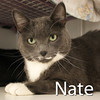 Nate and Boo (brothers) were adopted from the Cat House and Adoption Center on Saturday, September 12, 2015.<br /> <br /> Nate and Boo<br /> <br /> Handsome brothers.<br /> <br /> These two boys found themselves orphaned due to owner illness. Family problems, of one kind or another, are often the cause of homelessness. These two large lovable guys are asking for a forever home and love...together!
