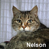 Nelson was adopted from the Cat House and Adoption Center on Saturday, June 27th, 2015.<br /> <br /> Nelson<br /> <br /> I Dream of Jeannie.<br /> <br /> Wanting nothing more than his own personal servant to tend to his needs. Nelson was uprooted when he was just abandoned at his former home. A large handsome guy in his pinstriped suit and white dress shirt awaits your visit.