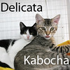 Kabocha and Delicata were adopted from their foster home at Steamboat Animal Hospital on Sunday, September 20, 2015.<br /> <br /> Kabocha & Delicata<br /> <br /> Boy Meets Girl<br /> <br /> Two sweet kittens who were rescued just hours apart, found abandoned and alone in different cities, find comfort and love with each other. A darling princess girl who will shower you with kisses and a sweet little gentleman who always wants your affection are looking for their forever home together. Although they are bonded together through their shared trials, there is more room in their hearts just waiting for you to claim it... but maybe they will claim your heart instead!
