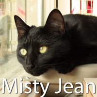 Misty Jean was adopted from the Cat House and Adoption Center on Wednesday, September 30, 2015.<br /> <br /> Misty Jean<br /> <br /> Leash-trained lover.<br /> <br /> Homeless with her family, tied to a post or a tree, Misty Jean rolled with the daily changes in her life. Her former family obviously had her best interest at heart, looking to re-home her because they met unfortunate circumstances. Beautiful and a real gentle soul.