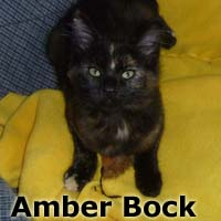 Amber Bock was adopted from the Cat House and Adoption Center on Saturday, November 7th, 2015.
