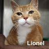 Lionel was adopted from Steamboat Animal Hospital on Friday, July 25, 2015.
