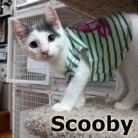 Scooby was adopted from the Cat House and Adoption Center on Saturday, November 7th, 2015.